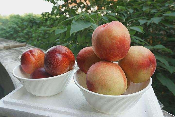 孕婦能不能吃油桃